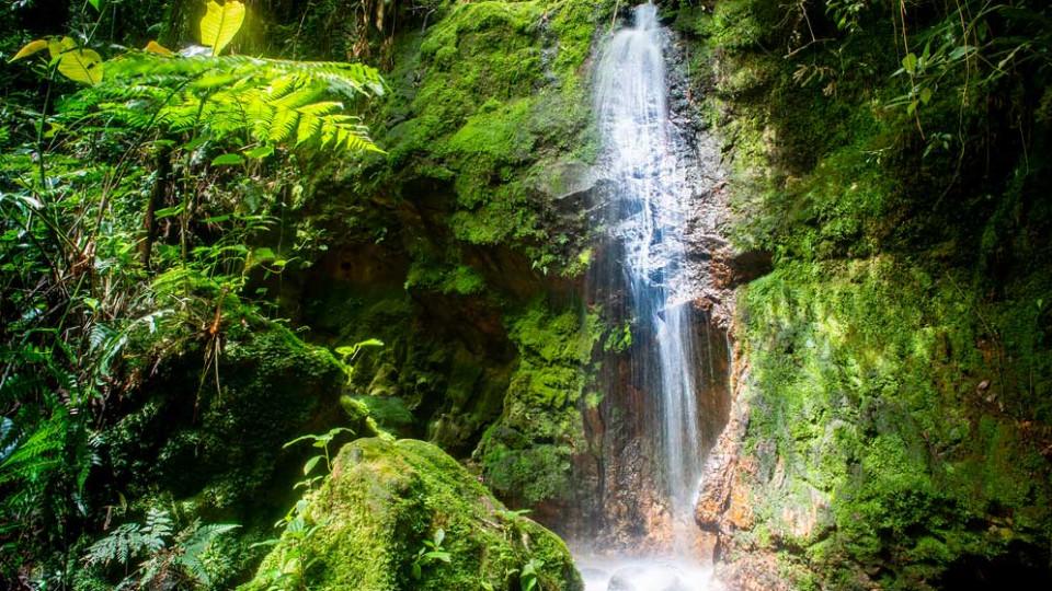 Uma das nascentes do rio Pinheiros, que fica em Paranapiacaba (SP)