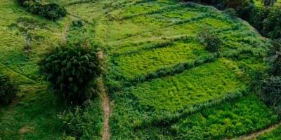 O pequeno produtor e a agropecuária sustentável