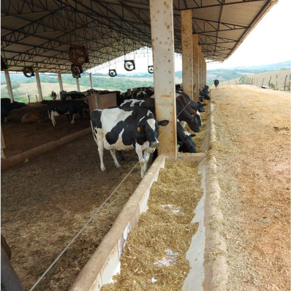 Fazenda leiteira em Lavras (MG)